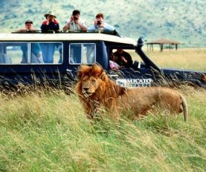 General Ideas of Organizing an Africa Safari